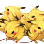 Pikachu chinchillas