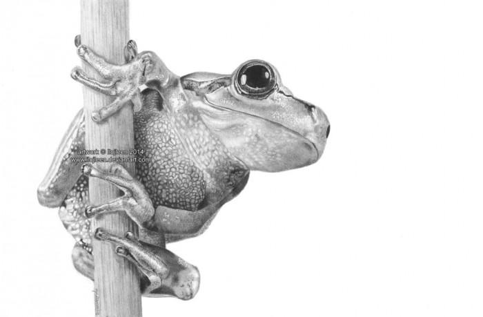RANA frog_by_ilojleen-d7al15a